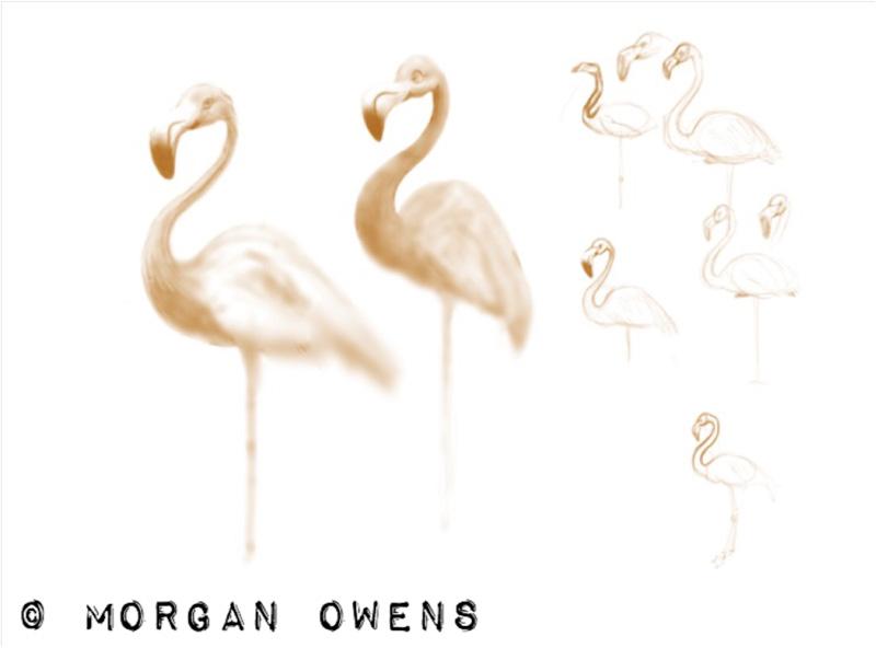 morganowens-flamingos